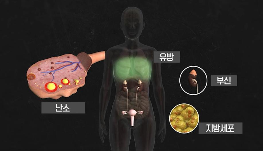 KBS 1TV  [생로병사의 비밀]